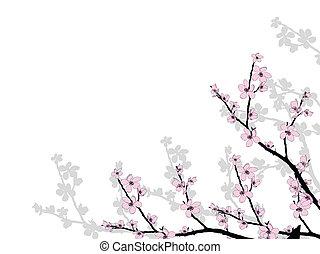 hermoso, flor, rama, cereza