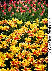 hermoso, flores del resorte