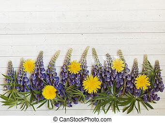 hermoso, flores, diente de león, lupino, amarillo, space., plano de fondo, luz, copia