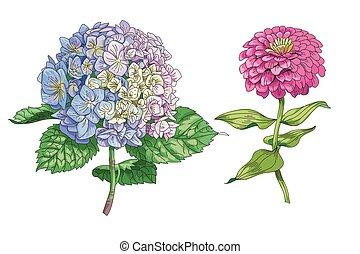 hermoso, flores, illustration., apacible, hydrangea,...
