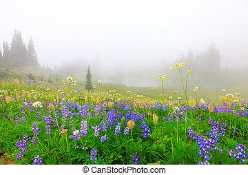 hermoso, flores salvajes, campo, con, lago, en las montañas,...