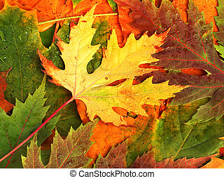 hermoso, fondo, de, caído, otoño sale, para, diseño