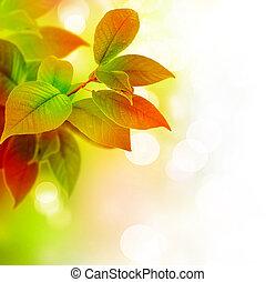 hermoso, hojas