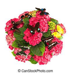 hermoso, hortensia, flores, con, colorido, mariposas