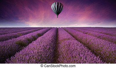 hermoso, imagen, de, campo lavanda, verano, ocaso, paisaje, con, globo del aire caliente