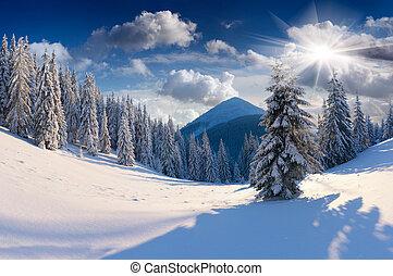 hermoso, invierno, árboles., nieve cubrió, paisaje