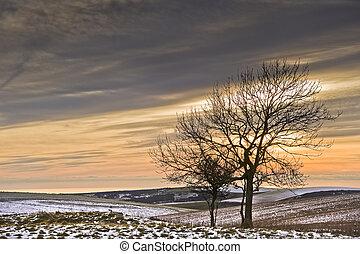 hermoso, invierno, colorido, encima, ocaso, paisaje