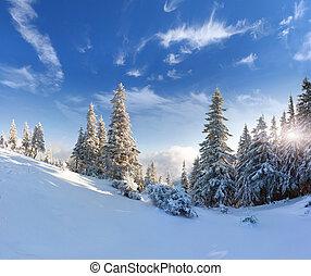 hermoso, invierno, nieve, árboles, cubierto, paisaje