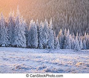 hermoso, invierno, salida del sol, en, el, montaña, forest.