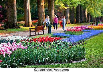 hermoso, jardín, de, flores coloridas, -, keukenhof, en, el,...