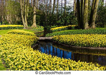 hermoso, jardín, en, spring., primavera