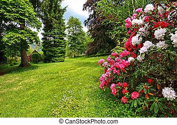 hermoso, jardín inglés, en, primavera