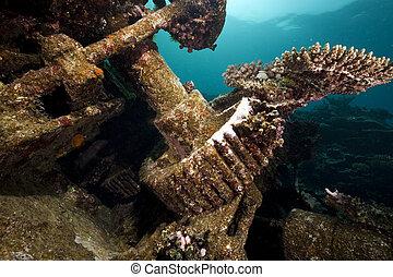 hermoso, kormoran, naufragio, restos, coral, crecimiento