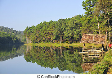 hermoso, lago, paisaje, con, árboles de pino, forrest