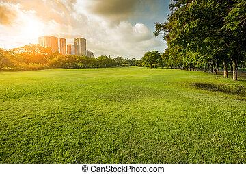 hermoso, mañana, luz, en, parque público, con, campo de la hierba, y, verde, ambiente, uso, como, plano de fondo