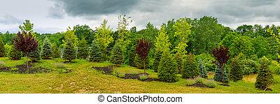hermoso, mañana, luz, en, parque público, con, hierba verde, campo