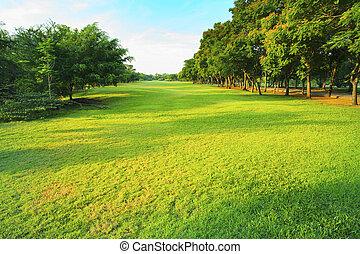 hermoso, mañana, luz, en, parque público, con, hierba verde, campo, un