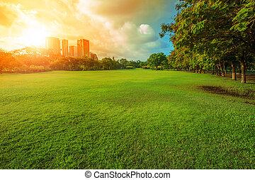 hermoso, mañana, luz, en, parque público, con, hierba verde, campo, y, verde, fresco, árbol, planta, perspectiva, a, espacio de copia, para, multiuso