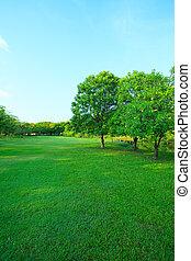 hermoso, mañana, luz, en, parque público, con, hierba verde, campo, y, verde, fresco, árbol, planta, perspectiva, a, espacio de copia, para, multiuso, vertical, forma