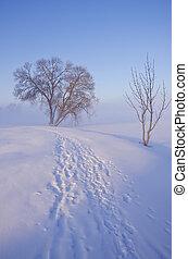 hermoso, mañana temprana, paisaje de invierno