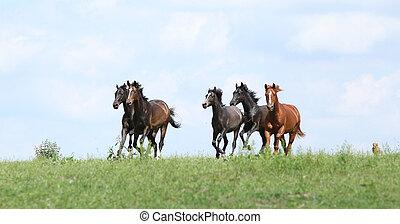hermoso, manada de caballos, corriente, juntos