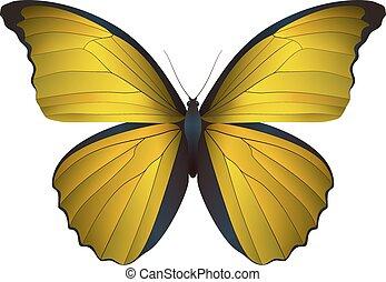 hermoso, mariposa, blanco, aislado, plano de fondo