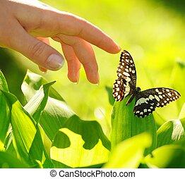 hermoso, mariposa, mano humana