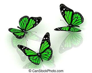 hermoso, mariposa, verde, tres