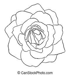 hermoso, monocromo, negro y blanco, rosa, aislado