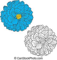 hermoso, monocromo, y, color, bosquejo, dalia, flor, en, un, fondo blanco