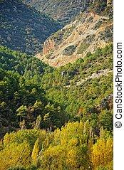 hermoso, montaña, bosque, paisaje