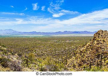 hermoso, montaña, cactos, paisaje del desierto