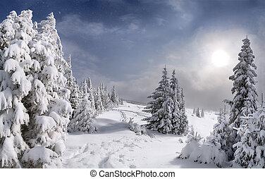 hermoso, montañas, carpathian, paisaje de invierno