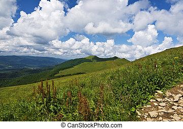 hermoso, montañas verdes, en, polonia, de, bieszcady