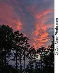 hermoso, nubes, florida, hillsborough, parque, estado,...