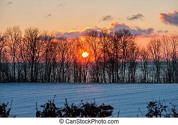 hermoso, ocaso, árboles invierno, nieve