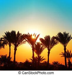 hermoso, ocaso, con, árboles de palma
