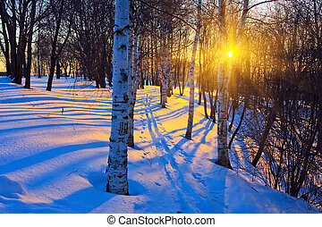 hermoso, ocaso, en, un, invierno, parque