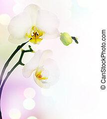 hermoso, orquídea, frontera