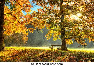 hermoso, otoño, árbol, con, caído, seco, hojas