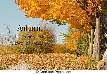 hermoso, otoño, carril, inspirador, cita, poco, laboratorio...