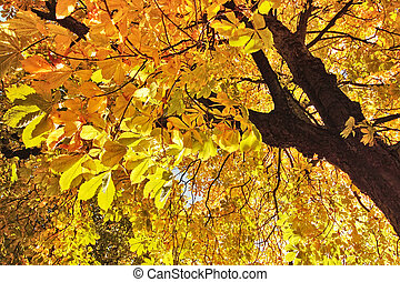 hermoso, otoño, en, escocia