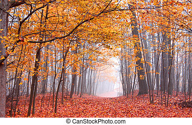 hermoso, otoño, escena