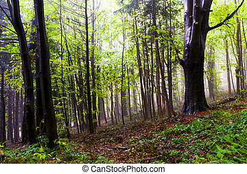 hermoso, otoño, forest.
