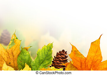 hermoso, otoño, hojas, arce, Plano de fondo