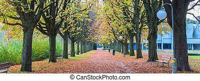hermoso, otoño sale, colorido
