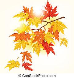 hermoso, otoño sale, vuelo, árbol