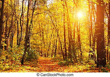 hermoso, paisaje, con, camino, en, bosque de otoño