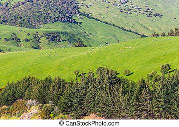 hermoso, paisaje, de, el, nueva zelandia