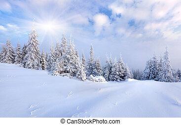 hermoso, paisaje de invierno, con, nieve cubrió, árboles.